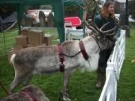 reindeer2 web